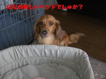 CIMG1158_20100627221746.jpg