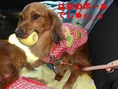 CIMG1169_20100606205327.jpg