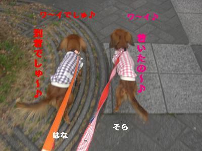 CIMG1177_20100209230529.jpg