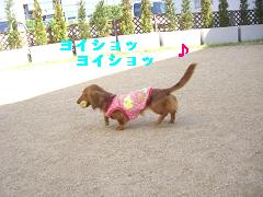 CIMG1188_20100607203503.jpg