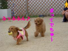 CIMG1189_20100607203653.jpg