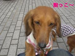 CIMG1194_20100302193702.jpg
