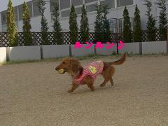 CIMG1197_20100607203631.jpg