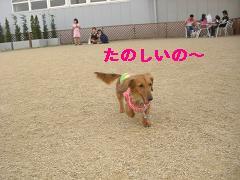 CIMG1208_20100607204742.jpg