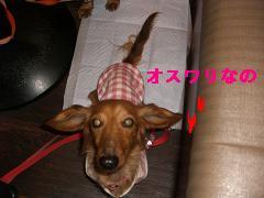 CIMG1211_20100303213652.jpg