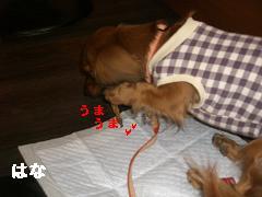 CIMG1214_20100303214011.jpg