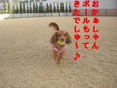 CIMG1214_20100607205038.jpg