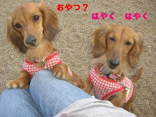 CIMG1215_20100607205313.jpg
