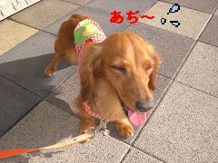 CIMG1221_20100607210148.jpg