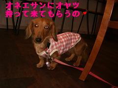 CIMG1224_20100303214543.jpg