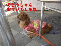CIMG1224_20100607210314.jpg