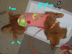 CIMG1227_20100607210342.jpg