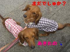CIMG1236_20100303220412.jpg