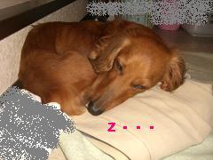 CIMG1242_20100606214244.jpg