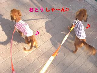 CIMG1243_20100303220757.jpg