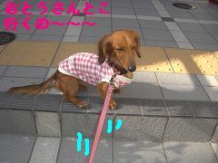 CIMG1257.jpg