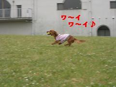 CIMG1259_20100609210826.jpg
