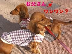 CIMG1261_20100304223838.jpg