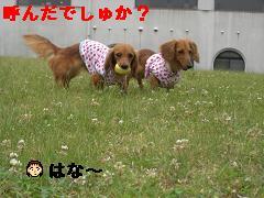 CIMG1266_20100609212102.jpg
