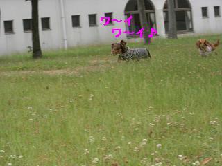 CIMG1268_20100610222035.jpg