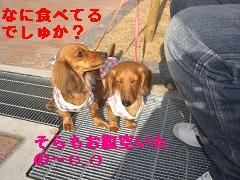 CIMG1269_20100304223856.jpg
