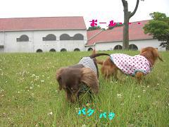 CIMG1275_20100610222430.jpg