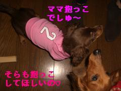CIMG1287_20100210191857.jpg