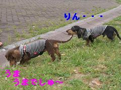 CIMG1290_20100610225314.jpg