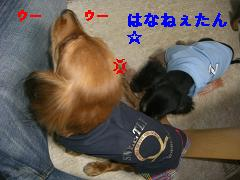 CIMG1292_20100210192022.jpg