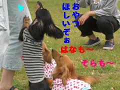 CIMG1292_20100610230036.jpg