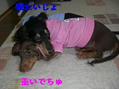 CIMG1295_20100210192808.jpg