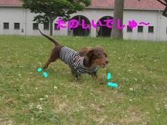 CIMG1295_20100611204813.jpg