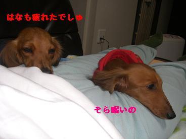 CIMG1296_20100210192904.jpg
