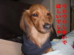 CIMG1297_20100210192842.jpg