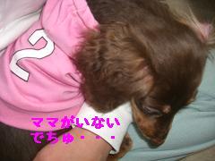 CIMG1301_20100210192949.jpg