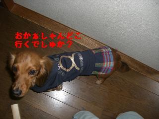 CIMG1313_20100211194356.jpg