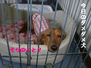 CIMG1324_20100610223003.jpg