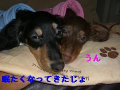 CIMG1343_20100211200719.jpg