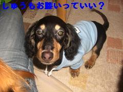 CIMG1348_20100211201220.jpg