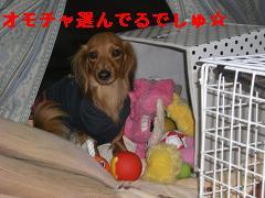 CIMG1366_20100212233217.jpg