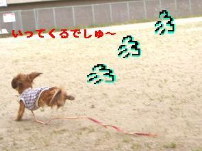 CIMG1375_20100614160504.jpg
