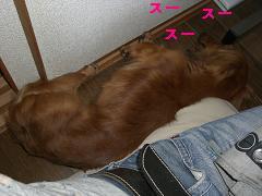 CIMG1377_20100614160708.jpg