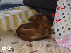 CIMG1378_20100614160723.jpg