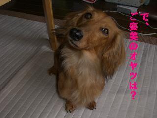 CIMG1388_20100616202747.jpg