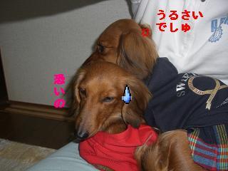 CIMG1393_20100212234635.jpg