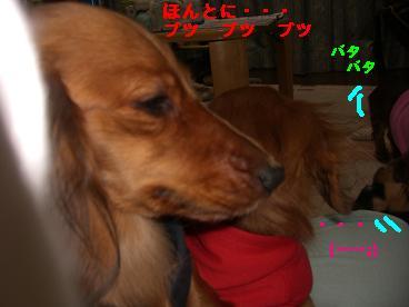 CIMG1398_20100212234826.jpg