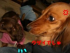 CIMG1409.jpg