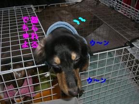 CIMG1413_20100213223341.jpg
