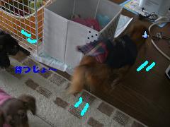 CIMG1418_20100213223827.jpg