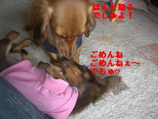 CIMG1430_20100214215148.jpg